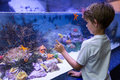 Young man looking at starfish in tank the aquarium Royalty Free Stock Image