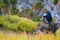Young man on mountain rock Royalty Free Stock Photo