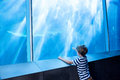 Young man pointing a shark with his finger at the aquarium Stock Images