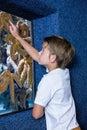 Young man pointing a starfish tank at the aquarium Royalty Free Stock Photos