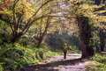 Young man with a rucksack going down by the beatiful forest pathway Royalty Free Stock Photo