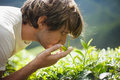 Young man smelling tea leaves on plantation fresh Stock Photography