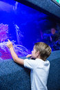 Young man touching an algae tank at the aquarium Royalty Free Stock Photos