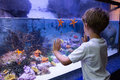 Young man touching a starfish tank at the aquarium Royalty Free Stock Photography