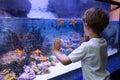 Young man touching a starfish tank at the aquarium Royalty Free Stock Photography