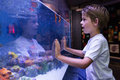 Young man touching a starfish tank at the aquarium Royalty Free Stock Images