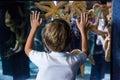 Young man touching starfish tank behind the camera at the aquarium Stock Photo