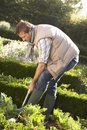 Young man working in garden Stock Images