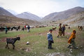 Young Pakistani shepherds Royalty Free Stock Photo