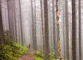 Young people are hiking in deep forest on cloudy day Royalty Free Stock Photos