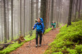 Young people are hiking in deep forest on cloudy day Royalty Free Stock Photography