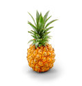 Young pineapple fresh professional on white background with clipping path Royalty Free Stock Images