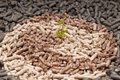 Young plant amoung different kind pellets Stock Photos