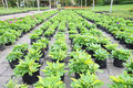 Young plant green house nursery Stock Image