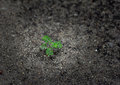 young plant  on the ground Royalty Free Stock Photo