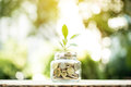 Young plant growing in the glass jar that have money coins Royalty Free Stock Photo