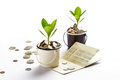 Young plant growing in glasses jars of coins account passbook, saving money, investment and financial Royalty Free Stock Photo