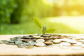 Young plant growing from heap of money coins Royalty Free Stock Photo