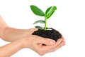 Young plant in hand Royalty Free Stock Photo
