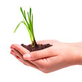 Young plant in hands over white background Stock Image