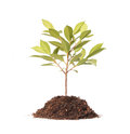 Young plant new life green sapling Stock Photo