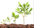 Young plant new life green sapling Stock Photography