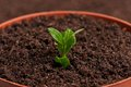 Young plant sprouted in the organic soil background close up Royalty Free Stock Images