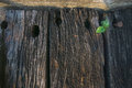 Young plant in unused wooden railway sleepers Royalty Free Stock Photography