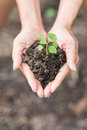 Young plant of vagetable with ground on hand Royalty Free Stock Photo