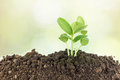 Young plants growing on soil against nature background Stock Photo