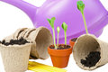 Young plants are ready for a bigger flowerpot Stock Images