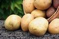 Young potato Royalty Free Stock Photo