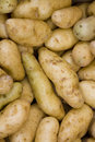 Young ratte patatoes Stock Photo