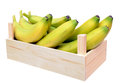 Young ripe banana in crate isolated on white Stock Image