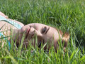 Young sensual smiling blonde lying on the grass in the sunlight Stock Photography