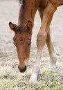 Young slim horse Royalty Free Stock Images