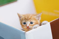 Young small cat lean out of the box and looking Royalty Free Stock Photo