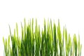 Young spring grass in bright sunlight isolated horizontal Stock Images
