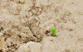 Young sprout as  beginning of  new life Stock Images