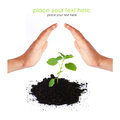 Young sprout environmental protection concept Royalty Free Stock Photo