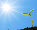 Young sprout reaches for the sun Stock Photography