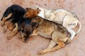Young street dogs huddling together and sleeping Stock Photography