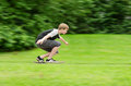 Young teen guy fast rides a skateboard in park Royalty Free Stock Photo