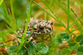 Young toad in the grass Stock Images