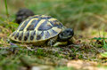 Young turtles from the wild nature photo of Royalty Free Stock Images