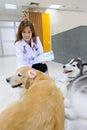 Young veterinarian at hospital asian Royalty Free Stock Photos