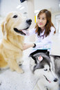 Young veterinarian at hospital with the dog Stock Photos