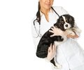 Young veterinary with spaniel positive brunette woman Stock Photo