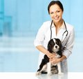 Young veterinary with spaniel positive brunette woman Stock Photography