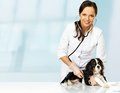 Young veterinary with spaniel positive brunette woman holding wounded leg Royalty Free Stock Photography